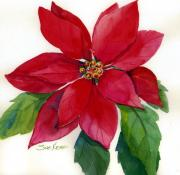 christmas-poinsettia-sue-kemp